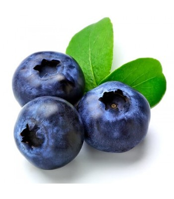 Bilberry (Черника)