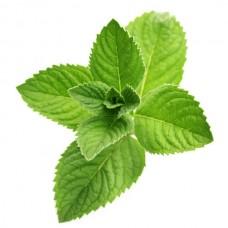 Mint (Мята)